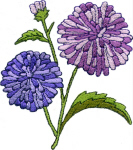 Aster Floral Free Embroidery Design
