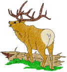 Realistic Elk Free Embroidery Design